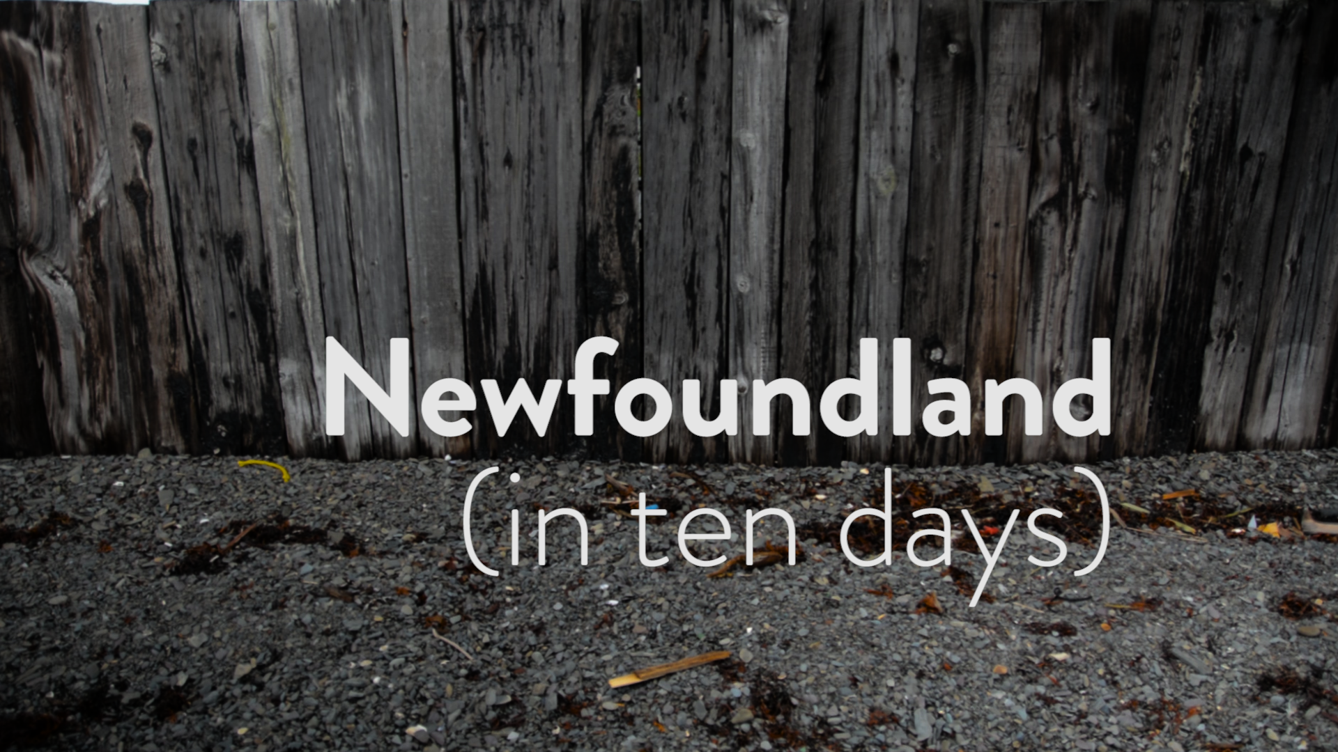 Newfoundland travel video viral success. Video advertising, digital marketing viral video